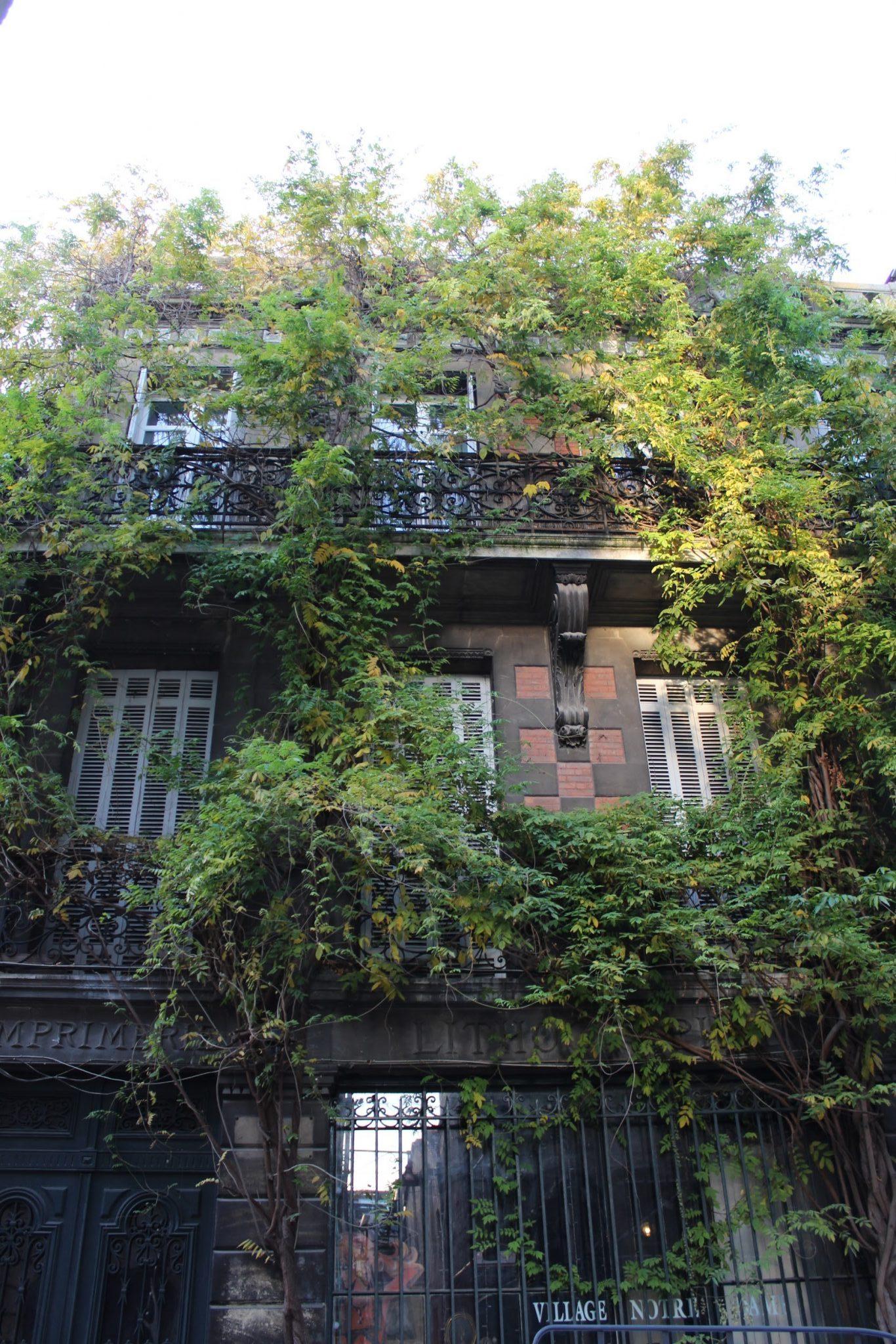 Immeuble envahi par les plantes rue notre dame